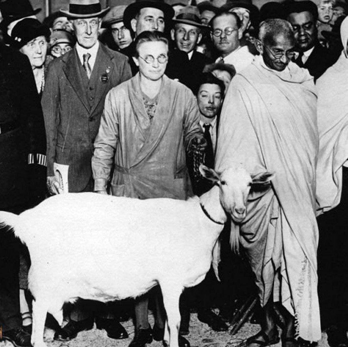 عکسی قدیمی از بز غیر قانونی گاندی!