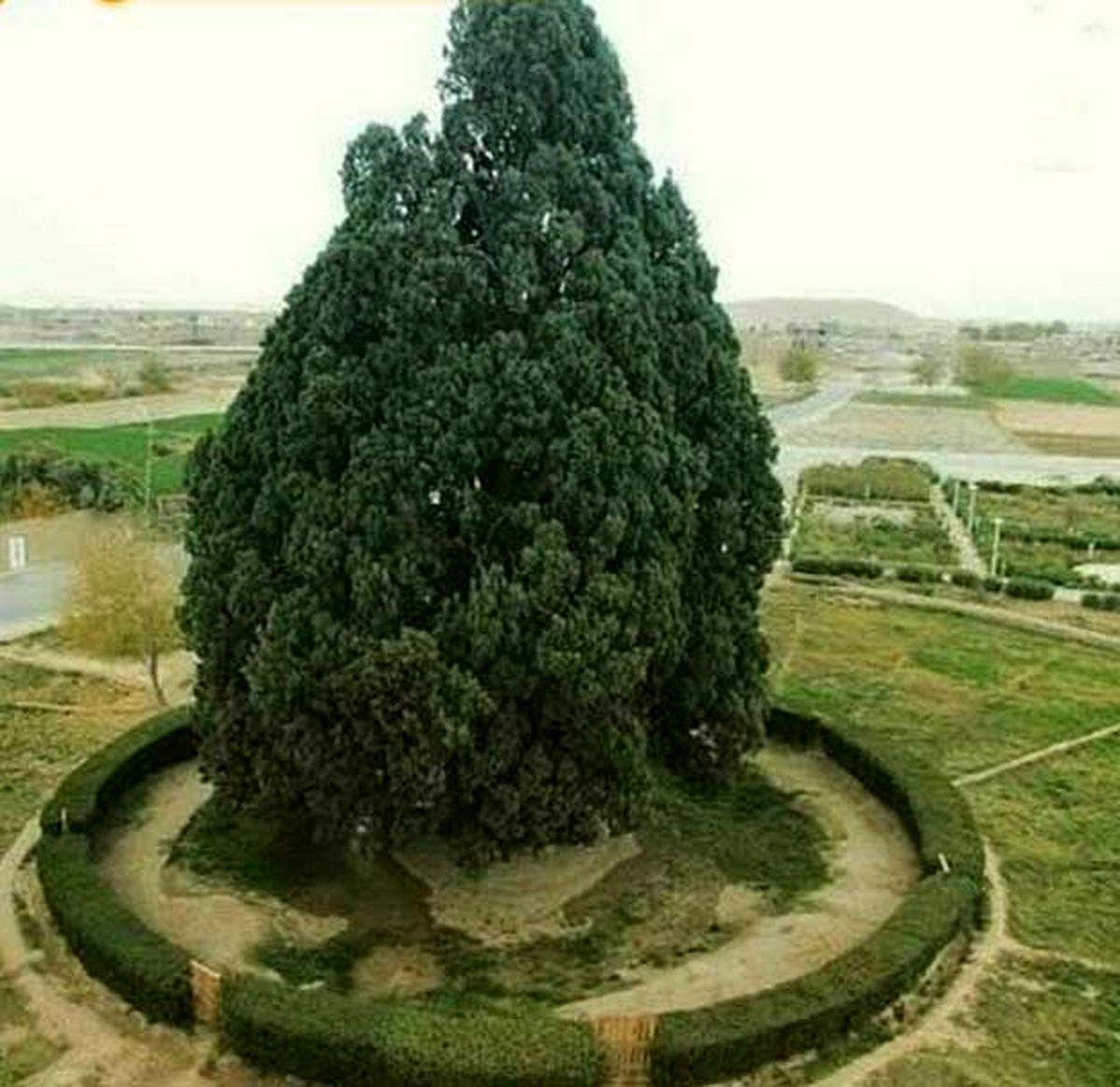قدیمی ترین موجود زنده ایران