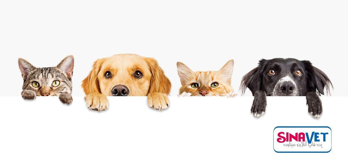 آیا شما سرپرست، حامی یا دوستدار حیوانات هستید؟ سیناوت همراه شماست