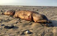ماهیت جانور عجیبی که طوفان هاروی به ساحل تگزاس آورد معلوم شد!
