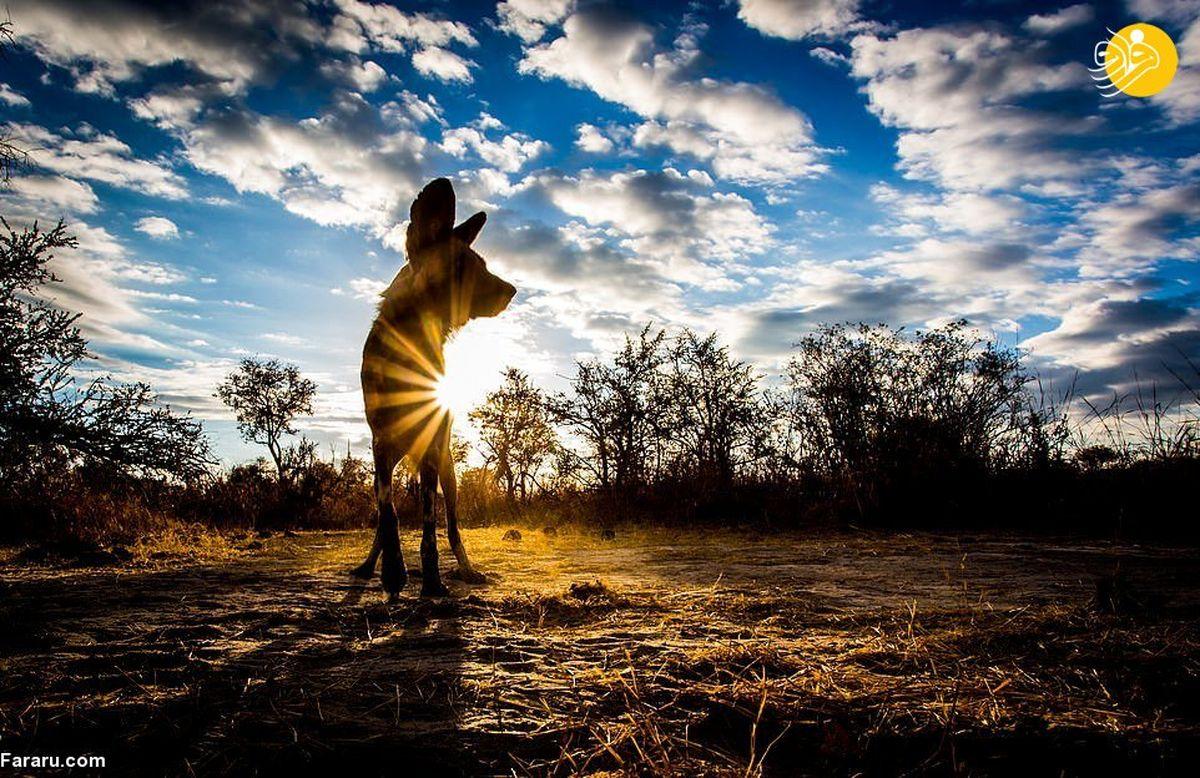 روی مهربان شکارچیان وحشی در آفریقا!+عکس ها