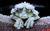 جانوری که در زمستان می میرد و در بهار زنده می شود + عکس