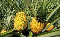 قیمت باورنکردنی آناناس