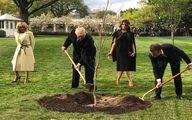 ماجراى مفقود شدن يک درخت در حياط كاخ سفيد