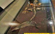 تصویر دیده نشده از اسکلت پری دریایی کشف شده/ عکس