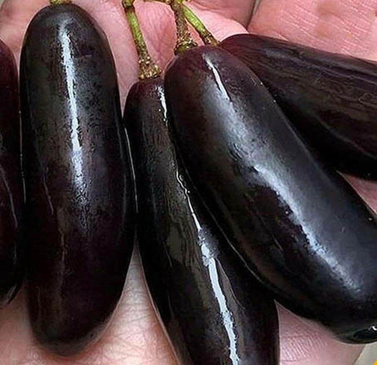 کمیاب ترین انگور جهان شبیه بادنجان