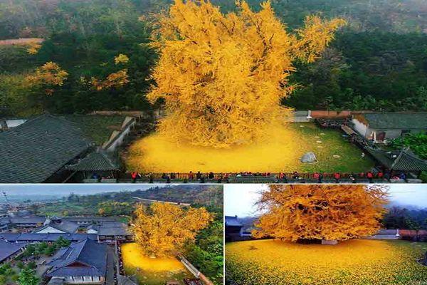 تصویر دیدنیازتنها موجود زنده جان سالم به در برده از انفجار بمب اتمی هیروشیما