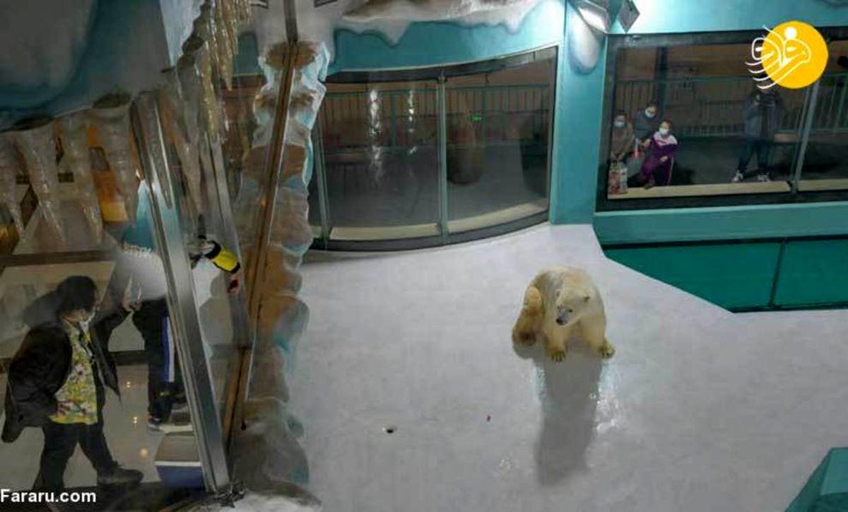 زندگی درهتل با خرسهای قطبی! +عکسها