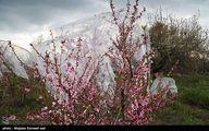 عکس / محافظت باغات از سرمای بهاری