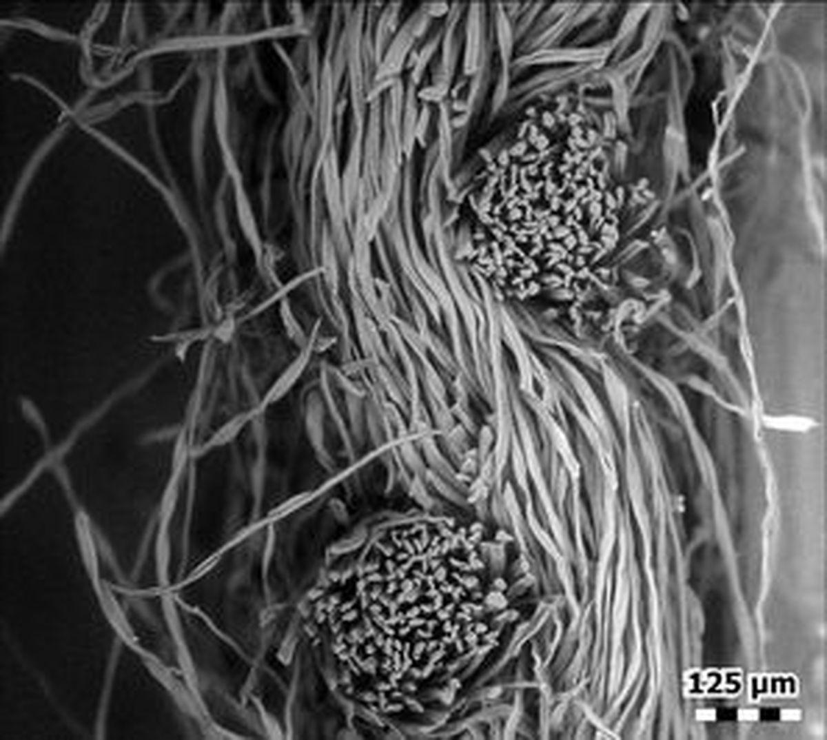 تصاویر جالب از ماسکهای کرونا زیر میکروسکوپ