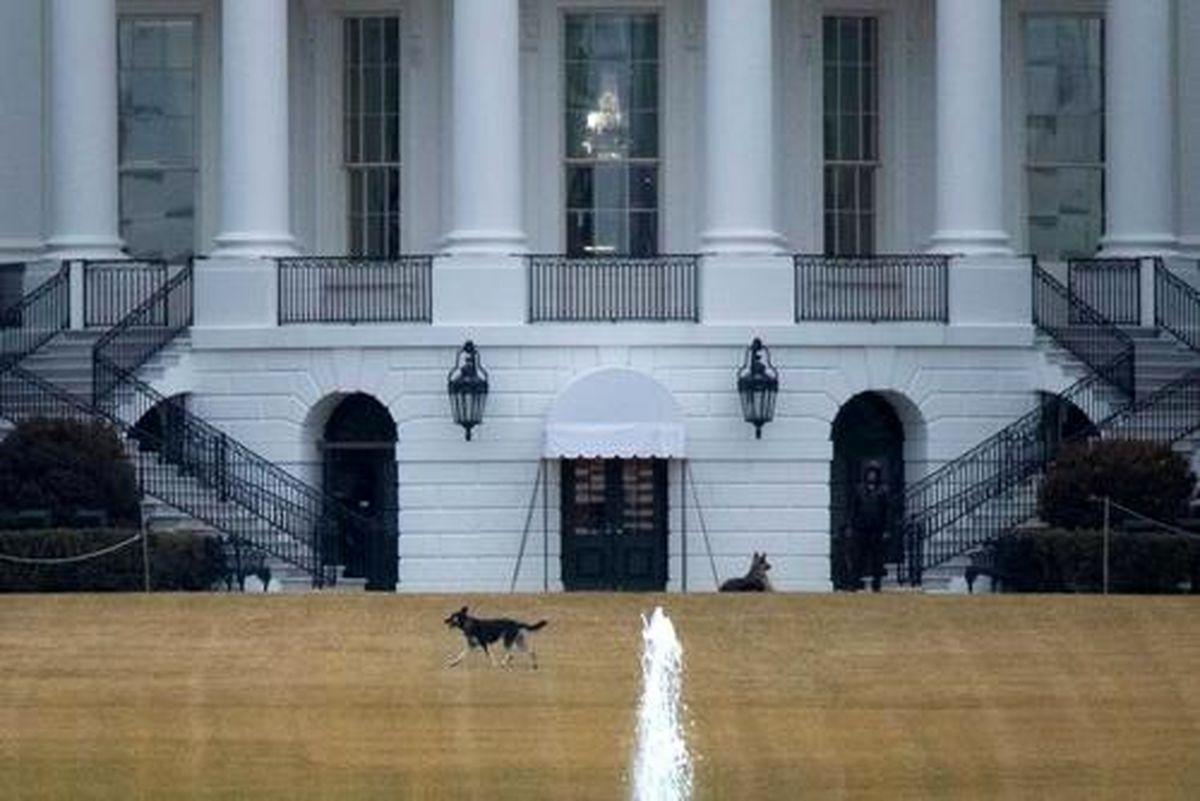 جولان 2 سگ خانواده جو بایدن در محوطه حیاط جنوبی کاخ سفید+عکس