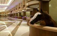 لوکس ترین اصطبل اسب جهان در دبی!
