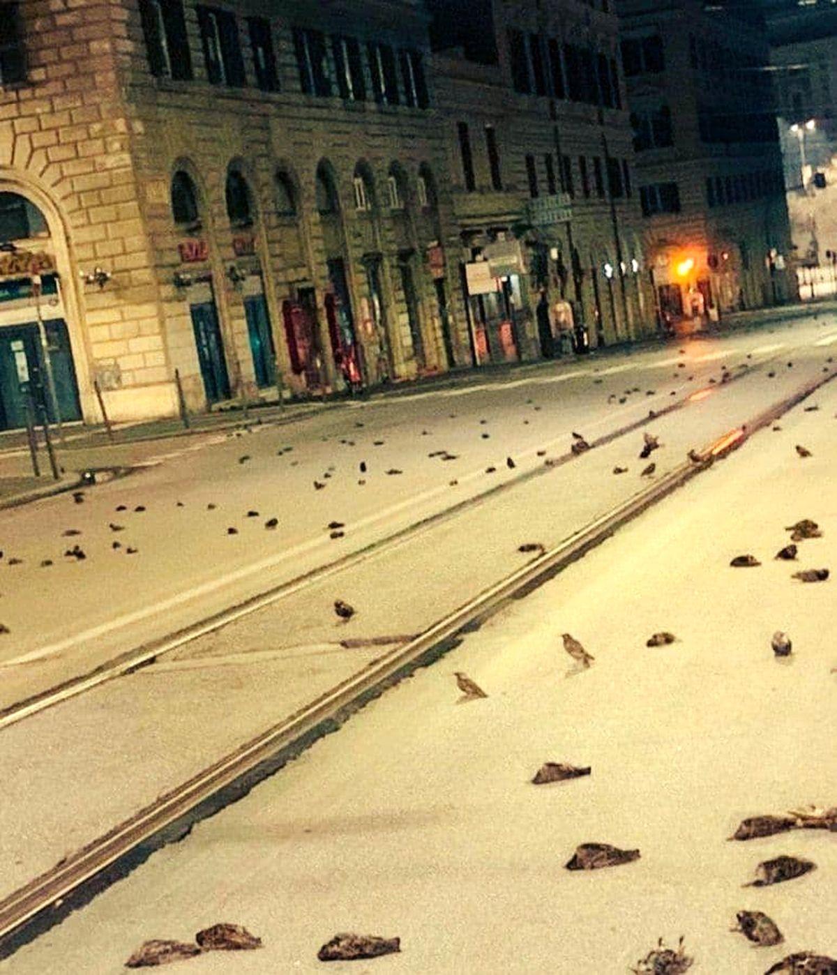 قتل عام کریسمسی پرندگان در رم! +عکس