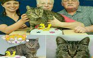 پیرترین گربه جهان ۳۱ ساله شد؛عکس