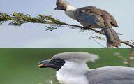 این پرنده عجیب ترین اسم دنیا را دارد