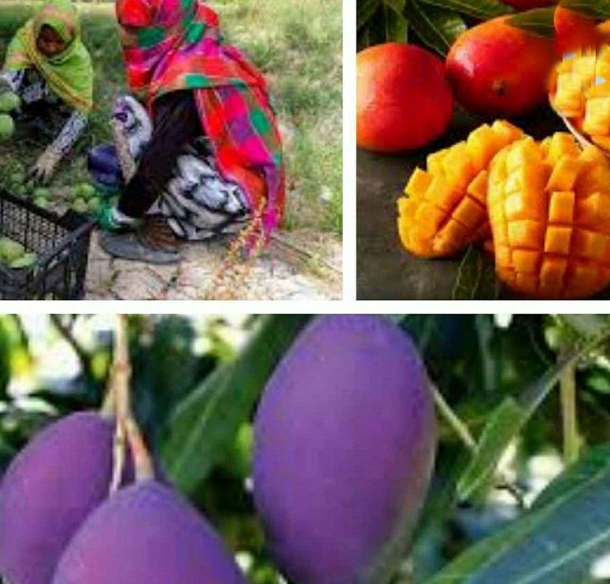 گرانترین میوه جهان کیلویی 3650 دلار
