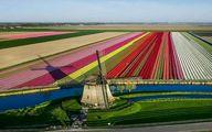 دشت رویایی گل های لاله در هلند