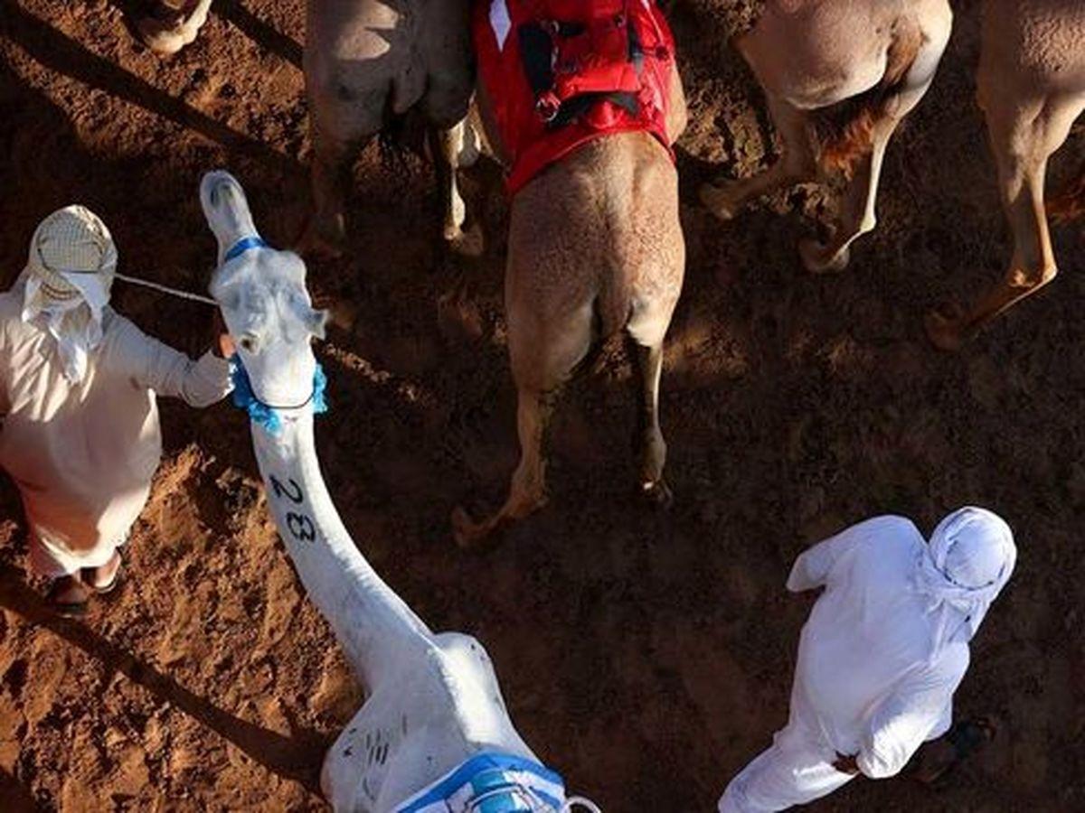تصاویری دیدنی از مسابقات سالانه شترسواری در دوبی